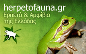 Herpetofauna of Greece